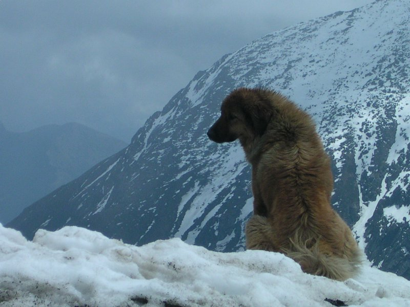 Rex at the India_Tibet_Border